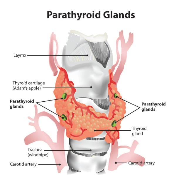Hyperparathyroidism and Weight Loss Surgery